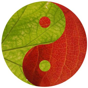 leaf-yangsm